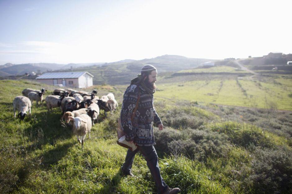 Netanel, un colono, conduce a su rebaño cerca del asentamiento de Havat Gilad, al sur de Nablús. (Reuters)
