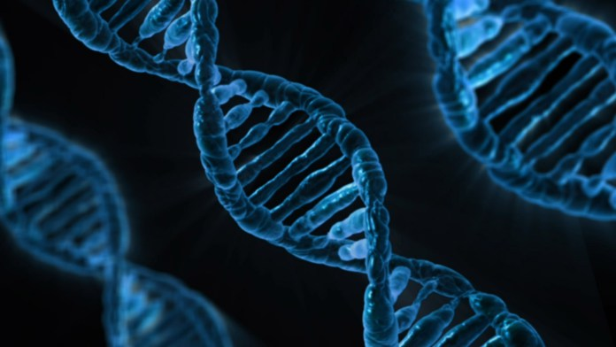 El ADN refuta la 'Leyenda Negra' antiespañola